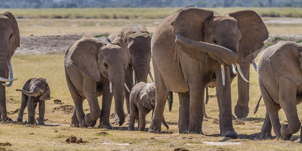 Your charitable gifts could help elephants.