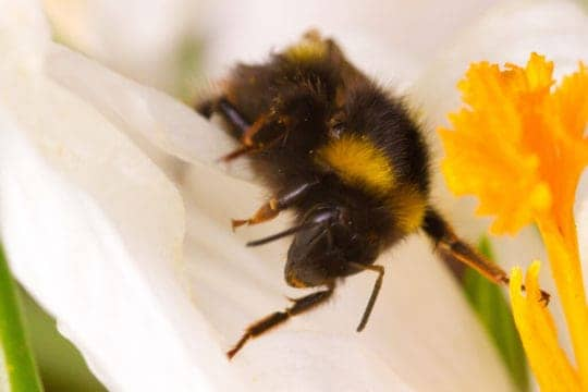 Bees are a terrible excuse for calling in sick.