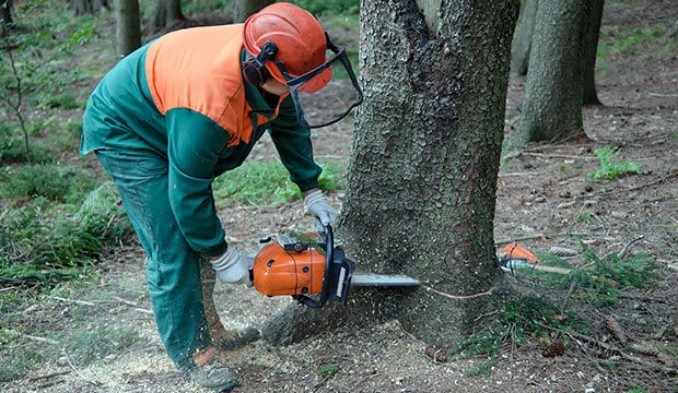 Lumberjack is among the fastest shrinking jobs.
