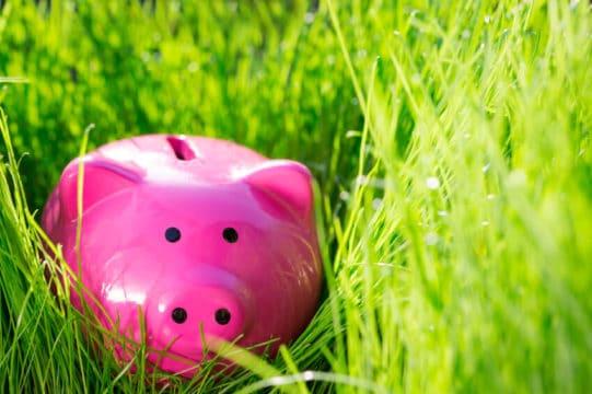 piggy bank outside in tall grass