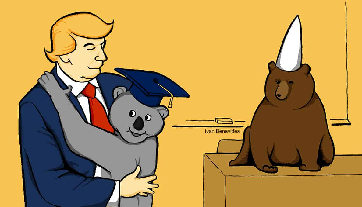 Donald Trump hugs a koala bear from Australia as he considers their student loan solution (illustrated)