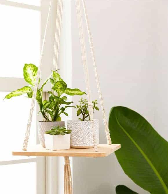 hanging plant hanger
