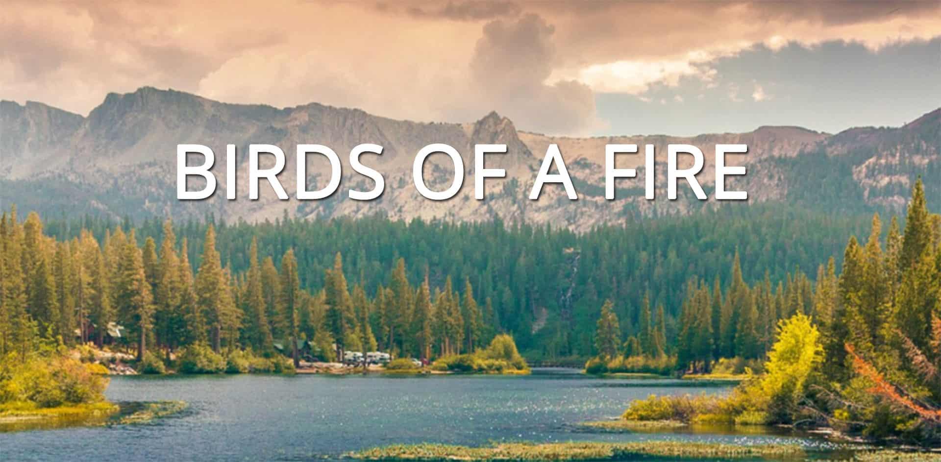 Birds of a Fire blog art
