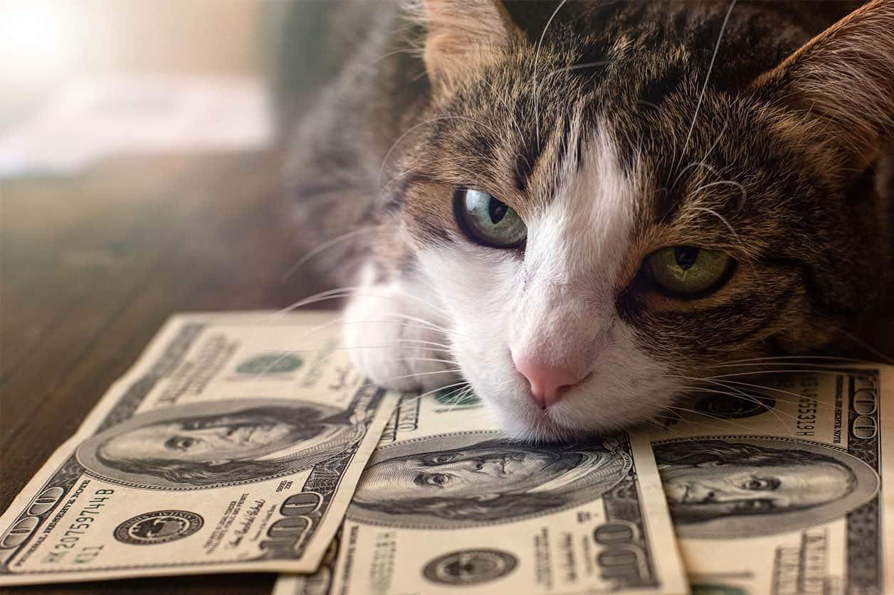 Adorable cat is lying on dollar bills