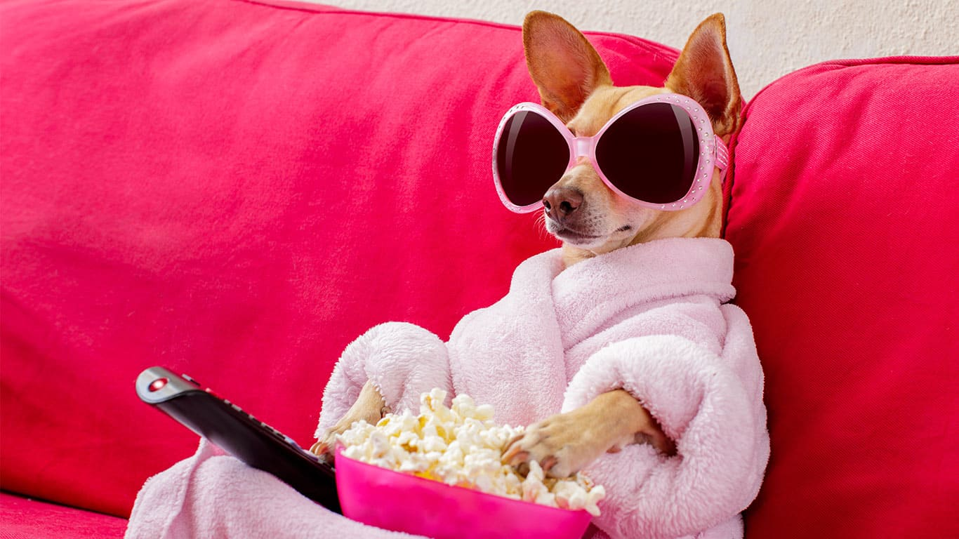 Dog in pink bath robe watching TV and eating popcorn