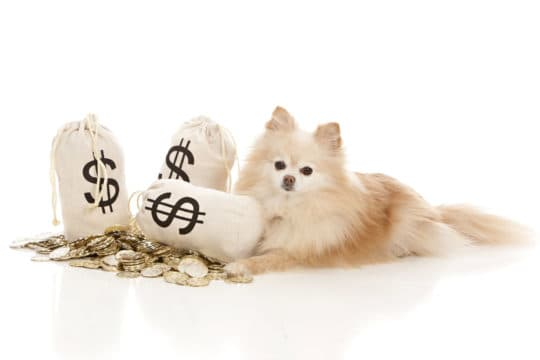 10 Ways to save money on pet expenses.
