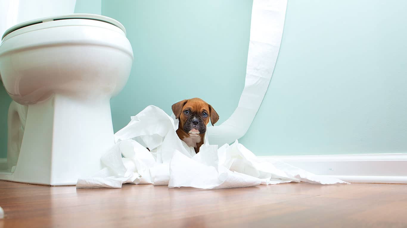 Puppy playing with toilet paper in bathroom