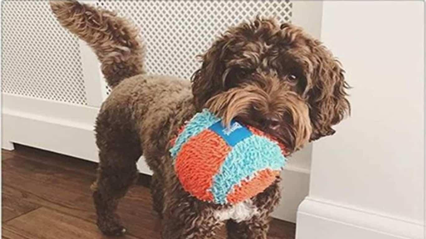 Juguete para mascotas como regalo de Navidad