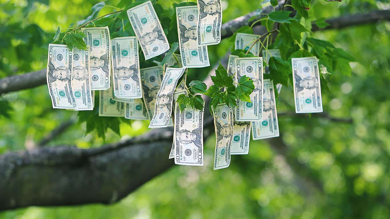 Money Growing on Trees