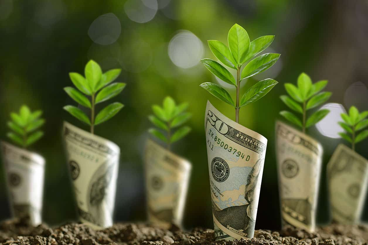 Bank notes rolled around plants on soil savings
