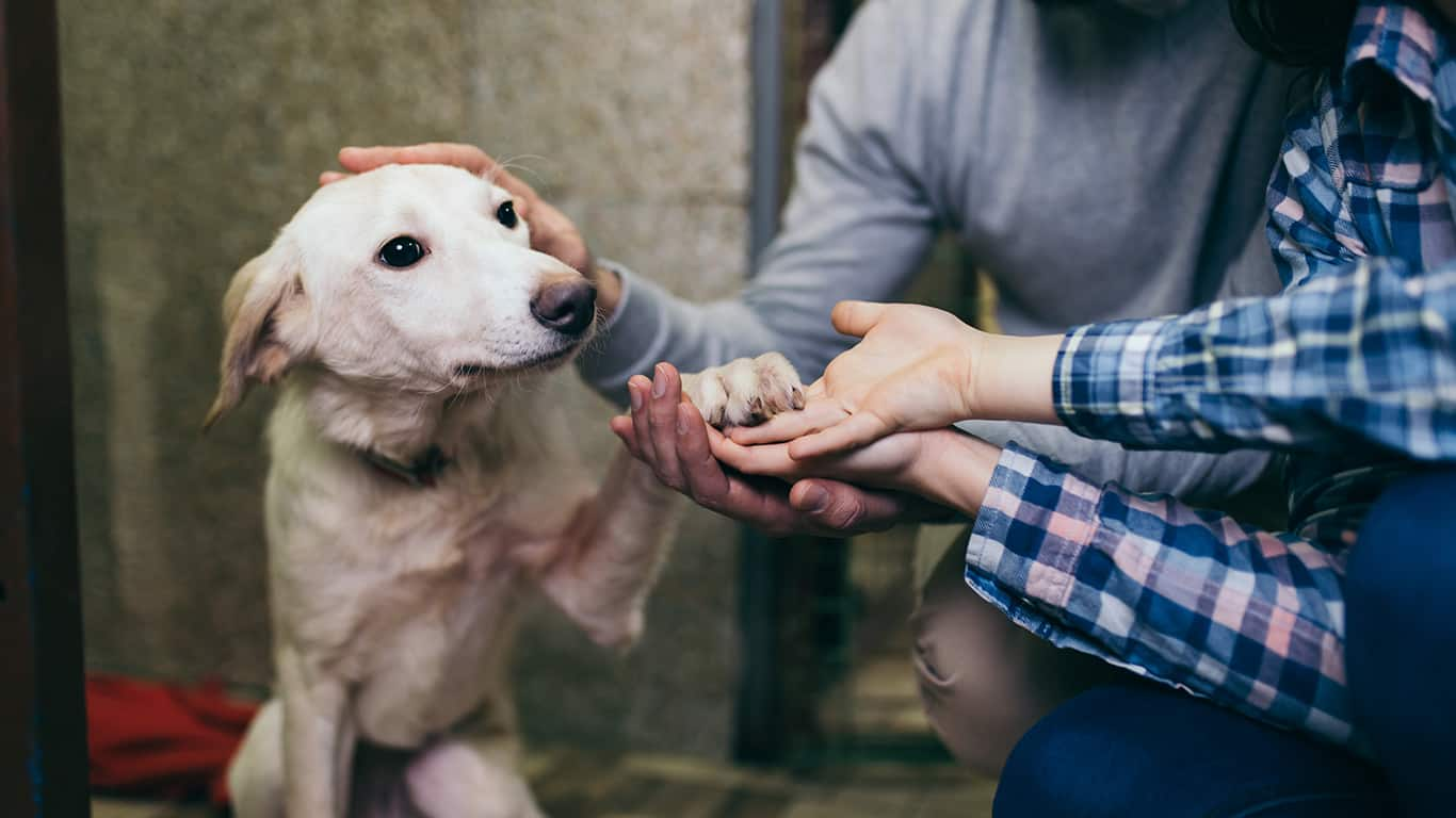 8 Costs to Know Before Adopting a Pet
