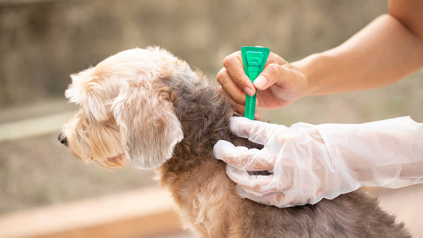 Heartworm flea and tick prevention